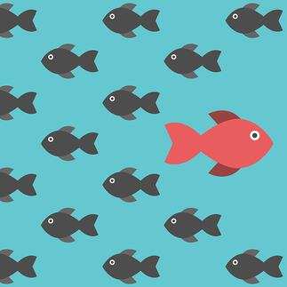 fish_hubspot_picture.jpg